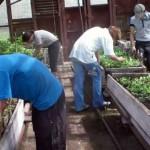 Коми крестьян начали вытеснять гастарбайтеры