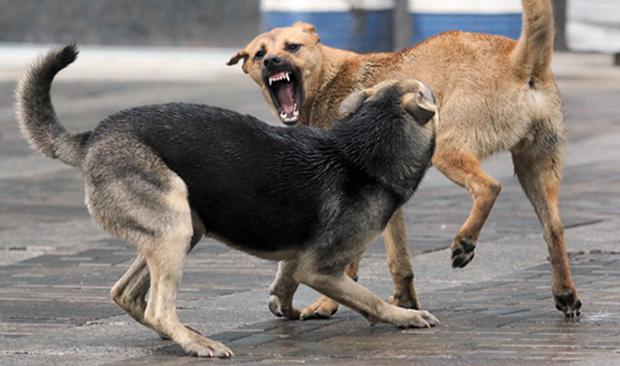 собаки_1