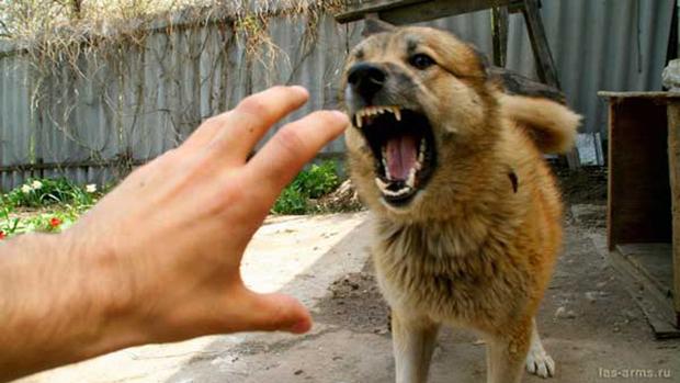 DogAttack-1