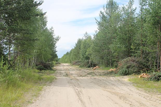 дорога за поселок к новосёлам1