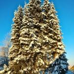 В рунете «засветилась»   мохнатая звезда из Усть-Кулома