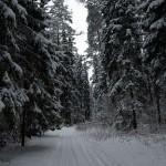 Смертельная лыжня (Криминал от 22 января)