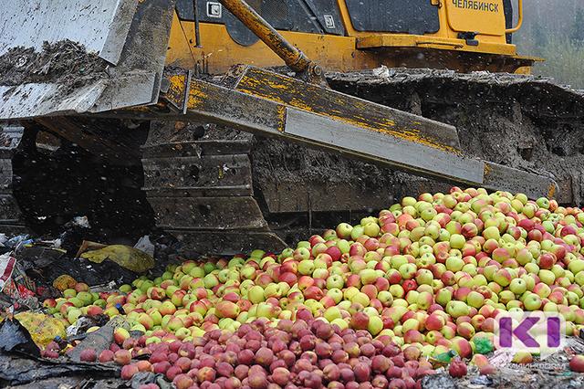 Польские яблоки нам больше не грозят