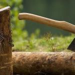 Даже гнилую древесину нельзя рубить на дрова
