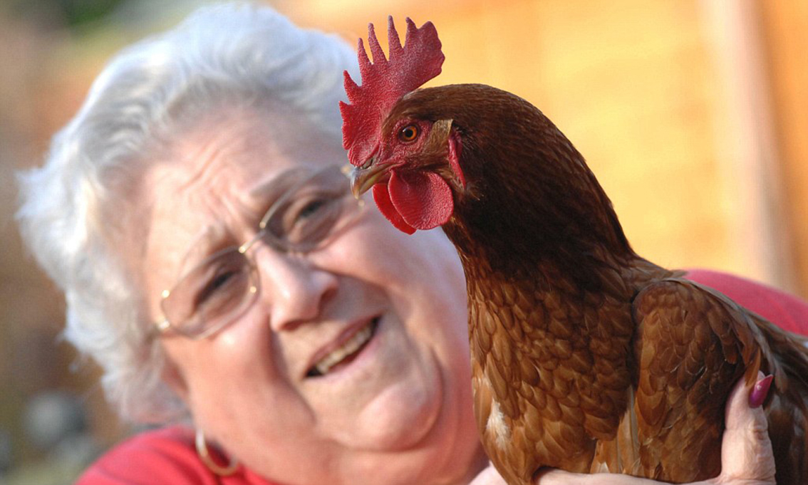 red_01cock.jpeg