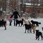 В Усинске бродячие псы уже совсем озверели