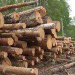 Лесопосадки в Коми