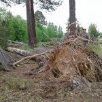 В таежном поселке ветер ломал крыши  и с корнем вырывал вековые деревья