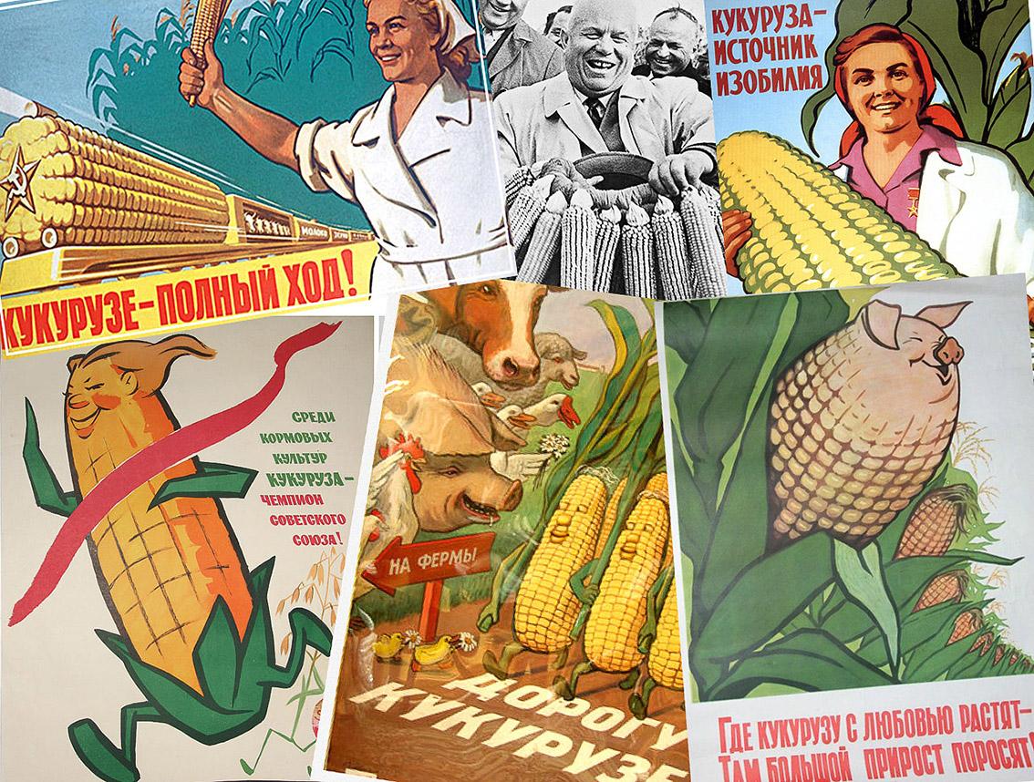 Выращивание кукурузы в ссср 17