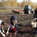 В этом году аграриям не повезло